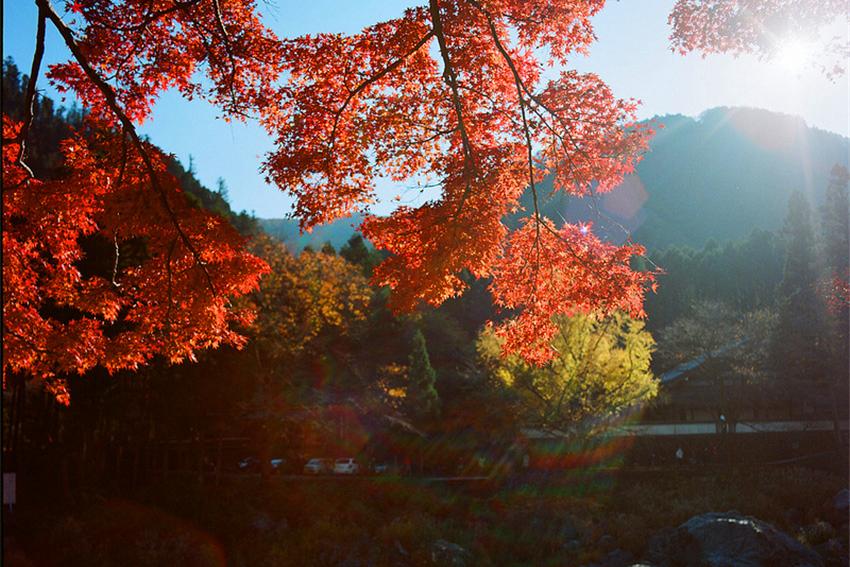 东京周边一日游:御岳溪谷+御岳山