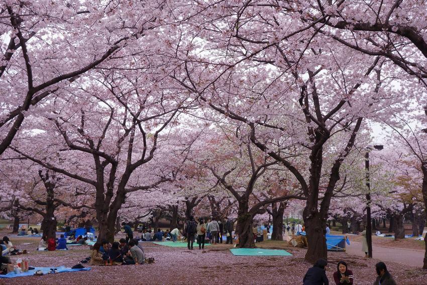 东京传统时尚1日游:代代木公园+明治神宫+表参道+原宿