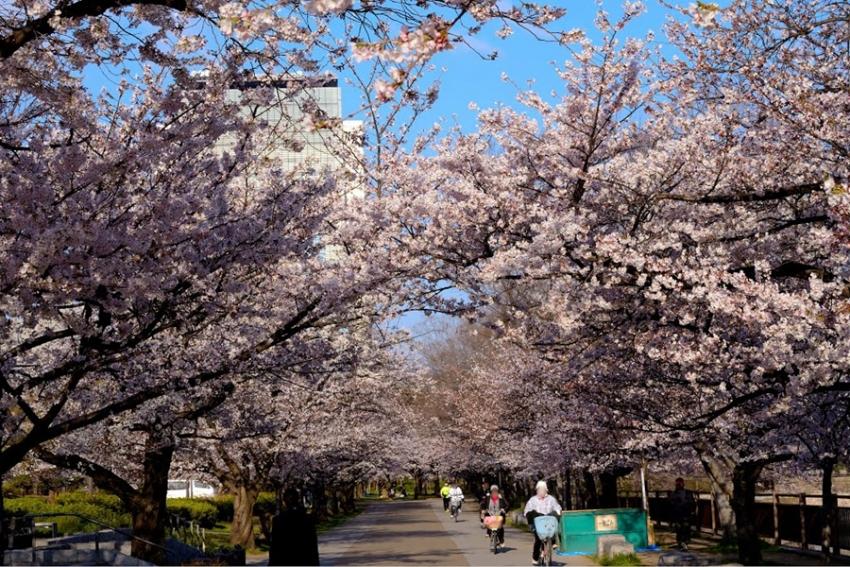 【一日游】大阪城公园+西之丸庭园+大阪城公园天守阁+梅田空中大厦瞭望台+泷见小路