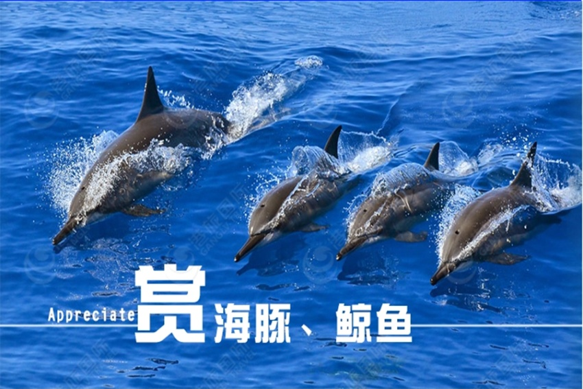 【花莲出海生态观鲸之旅】花莲市内免费接送