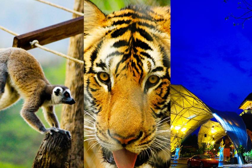 【门票】泰国清迈夜间野生动物园(套餐B,含接送)