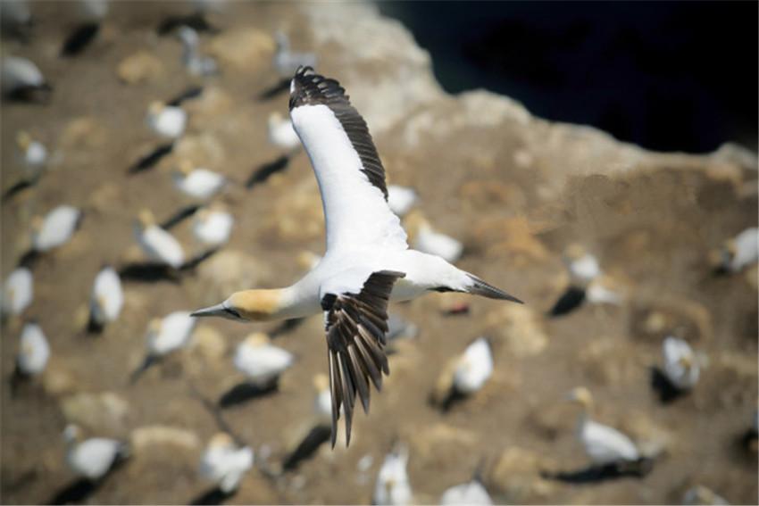 【司导推荐路线】奥克兰西海岸一日游:黑沙滩冲浪+穆里维海滩观鸟+库姆小镇+酒庄品酒