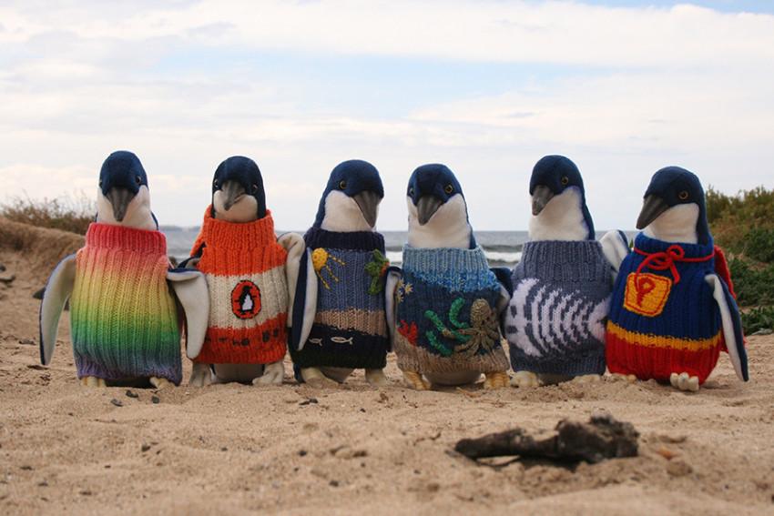 企鹅岛Phillip Island一日休闲游:菲利普岛巧克力工厂+菲利普岛大奖赛赛车道