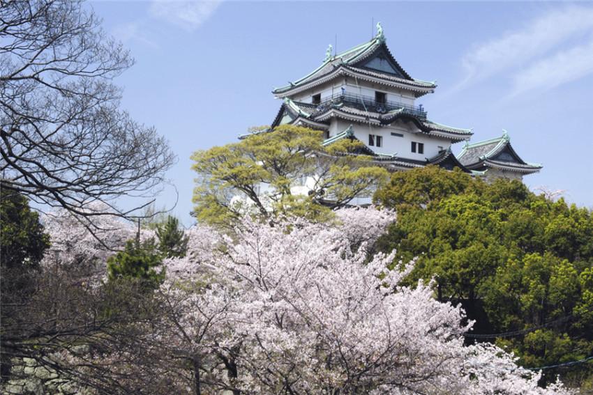 【和歌山-白滨温泉之旅】和歌山城+黑潮市场+白滨温泉