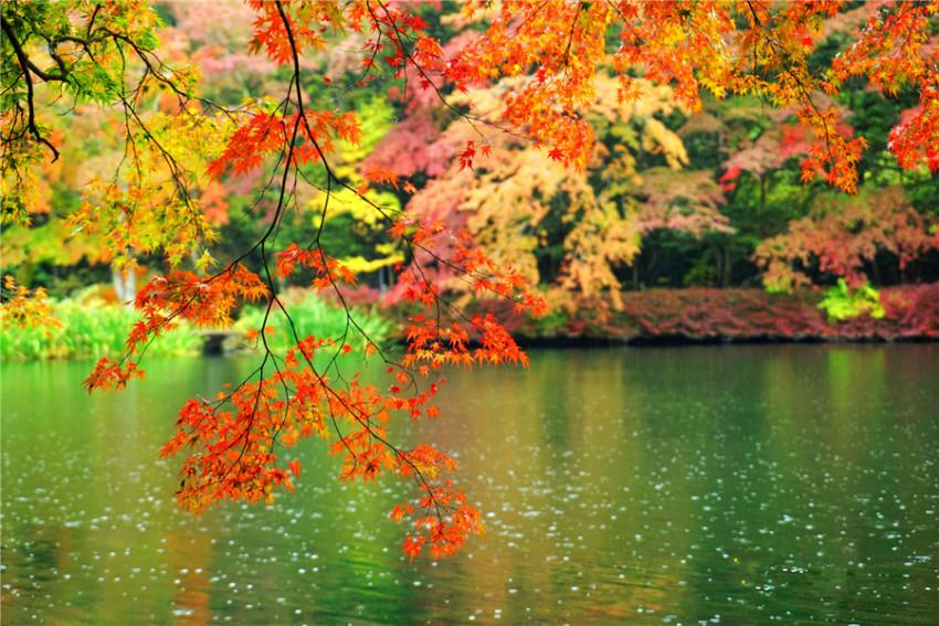 泡汤赏秋:云场池+白丝瀑布+圣保罗教堂+星野温泉