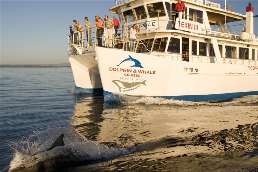 【司导推荐路线】杰维斯湾看鲸鱼看海豚:斯坦维尔公园+海港大桥+杰维斯湾+赫斯基小镇