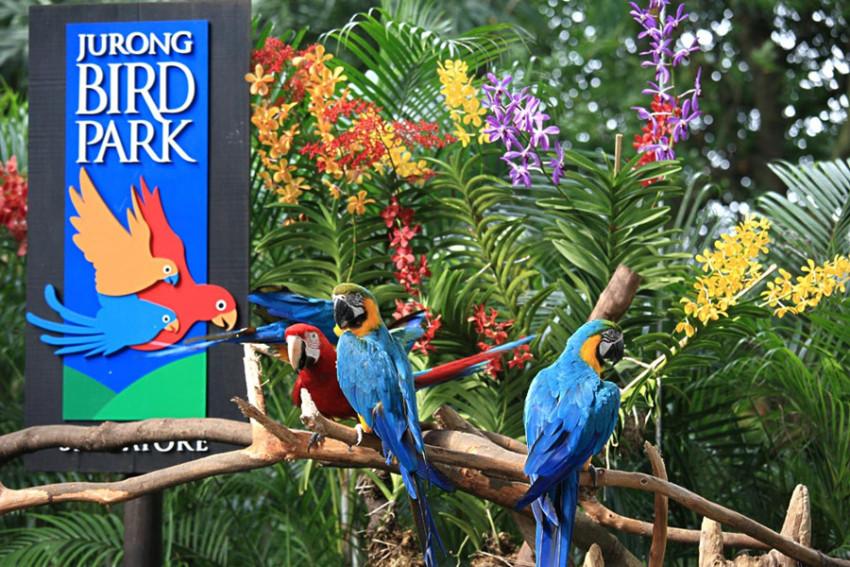 【新加坡裕廊飞禽公园门票 Jupong Bird Park ComboGroup】