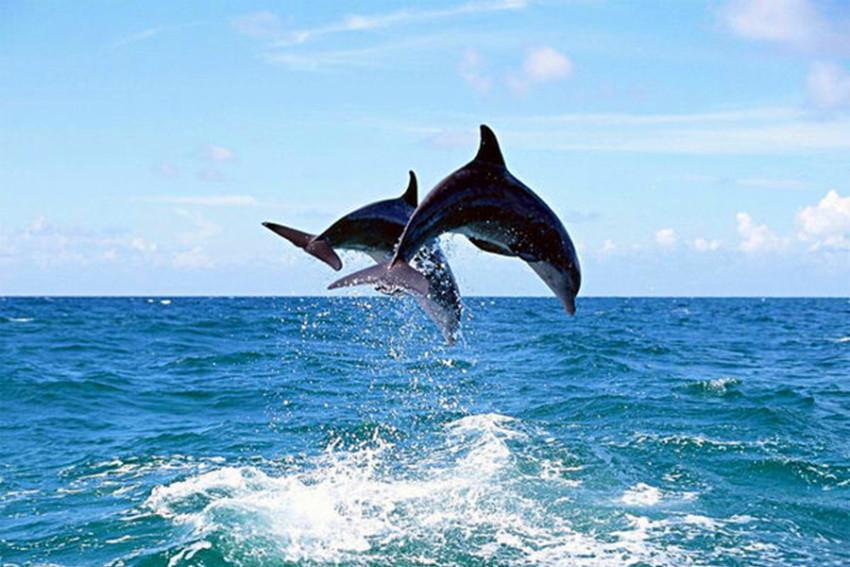 【司导推荐线路】宜兰精彩一日游:太平洋赏鲸豚+外澳飞行伞+礁溪温泉+苏澳冷泉+罗东夜市