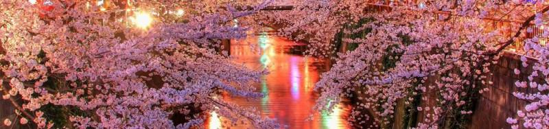 【京都赏樱一日游】平安神宫 + 南禅寺 + 哲学之道  + 清水寺 +祗园