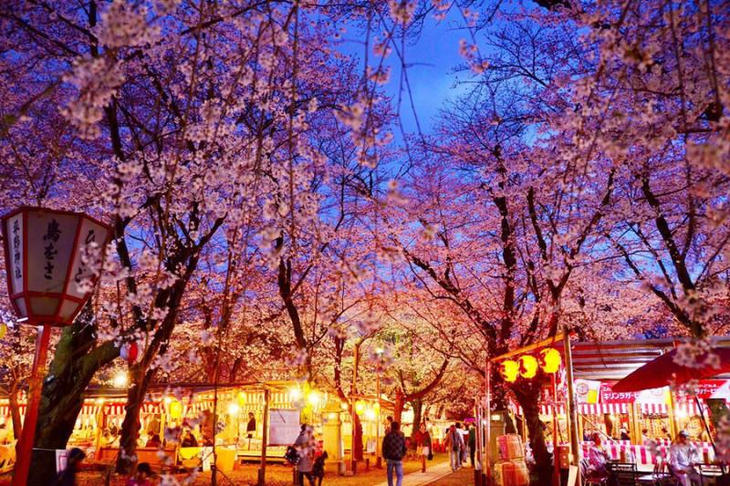 【京都夜樱一日游】哲学之道+清水寺+木屋町通+平野神社+二条城