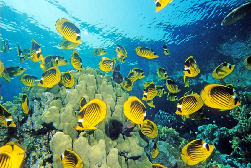 【门票】冲绳美之海水族馆门票