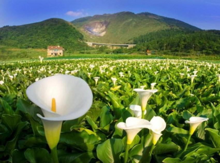 【一日游】慢享台北:阳明山公园+北投温泉博物馆+地热谷+士林夜市