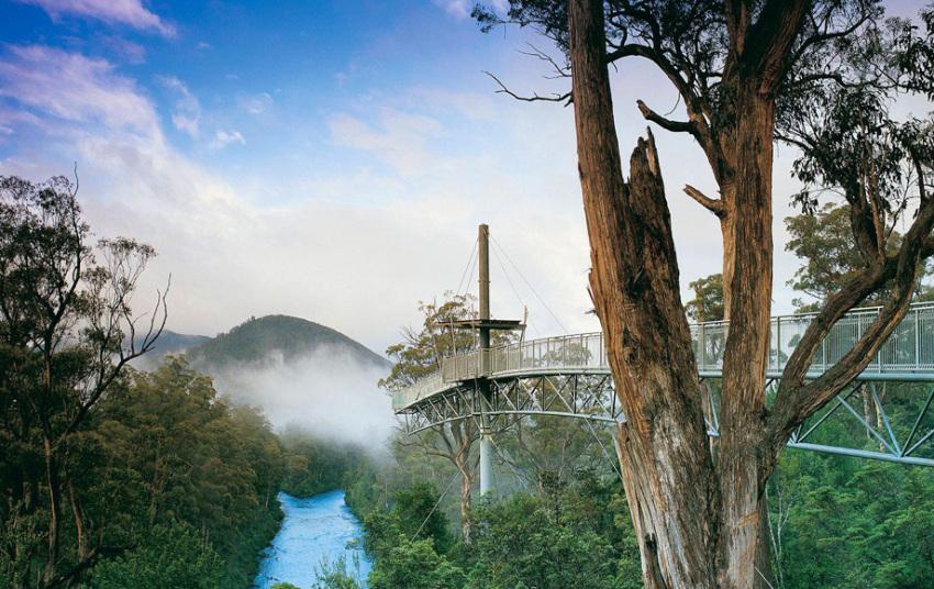 【霍巴特候恩谷一日游】塔胡恩森林保护区+塔胡恩空中走道+黑斯廷古洞