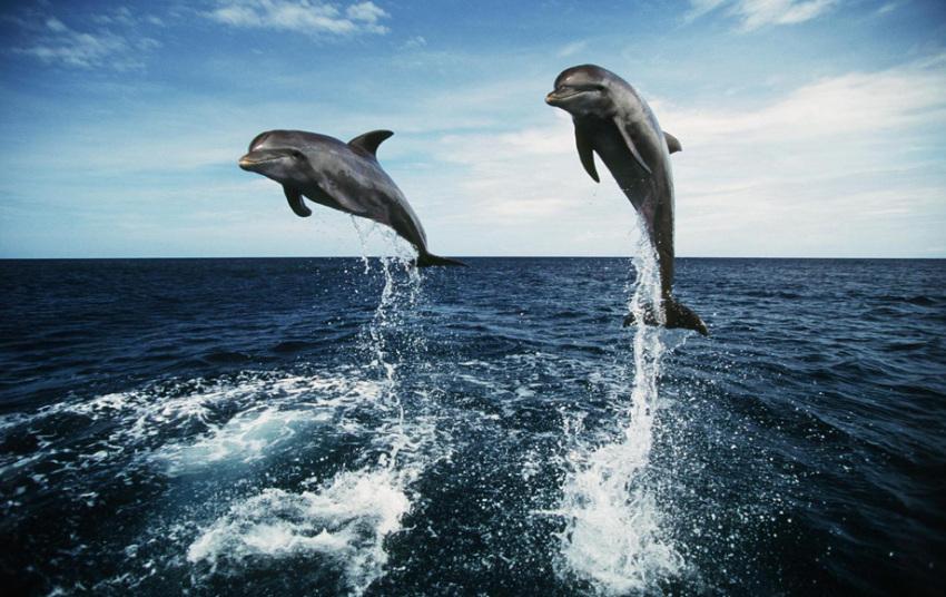 【悉尼斯蒂芬港一日游】爬虫动物公园+斯帝芬斯港观海豚+滑沙