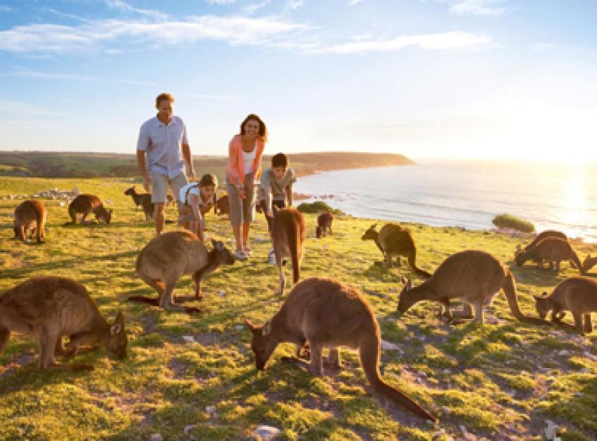 【阿德莱德袋鼠岛一日游】Cape Jervis 码头+袋鼠岛+海豹湾+Flinders Chase国家公园(14小时用车)